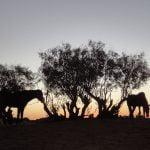 Maroc - La chevauchée du désert