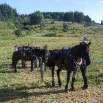 À la découverte des Pyrénées cathares